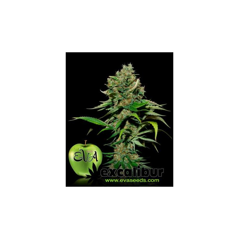 Eva Female Seeds - Excalibur (3f)