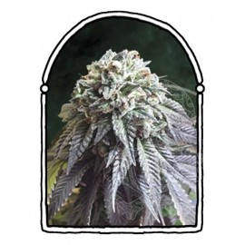 The Kush Brothers - The Dark Side (10f)