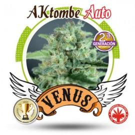 Venus Genetics - Aktombe Auto (3f)
