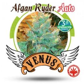 Venus Genetics - Afgan Ryder Auto (5f)