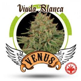 Venus Genetics - Viuda Blanca (5f)