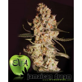 Eva Female Seeds - Jamaican Dream (3f)
