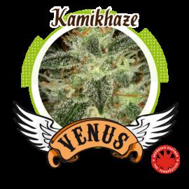 Venus Genetics - Kamikhaze (3f)