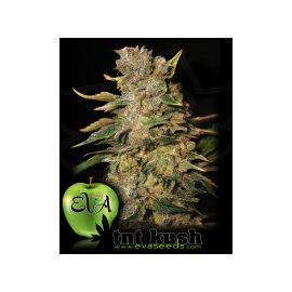 Eva Female Seeds - TNT Kush (3f)