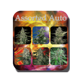 Buddha Seeds - Blister Assorted Auto (10f)